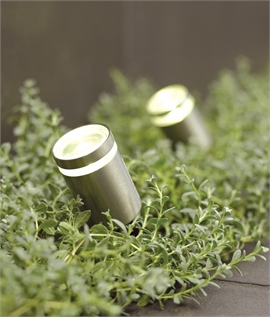 Compact LED Spike Light For Box Hedges & Planters